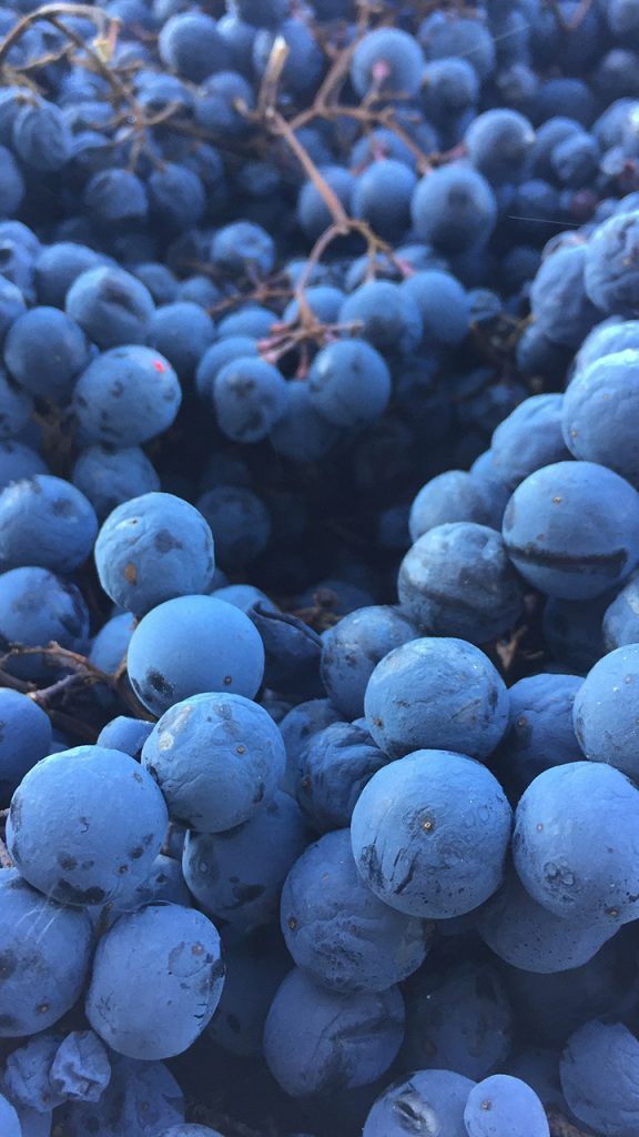 appassimento dei vini del collio